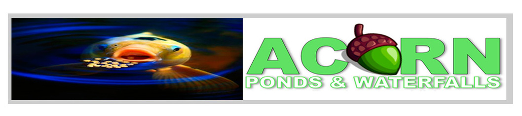 Professional Koi Pond Maintenance Services - Acorn Ponds & Waterfalls 585-442-6373