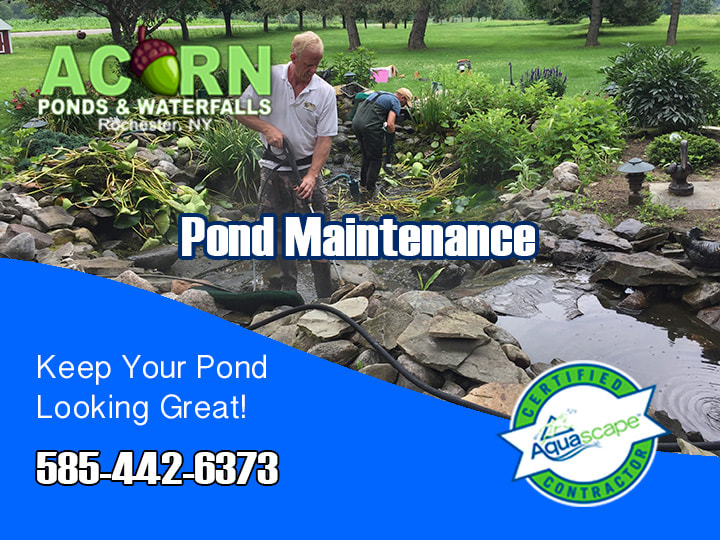 Pond Cleaning And Maintenance Services Rochester - Western New York