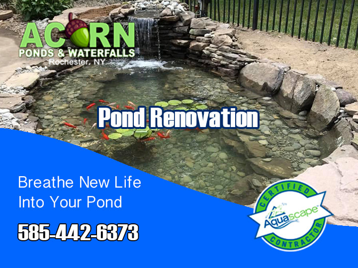 Acorn's Pond (Leak/Liner) Repair & Renovation In Rochester, Buffalo & Western (NY)